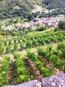 les vignes de Gilles Monier à Molompize (Cantal)